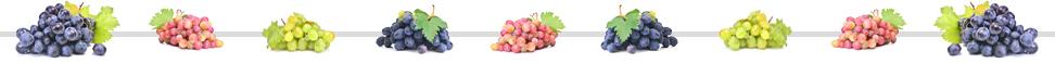 line-of-grapes.jpg