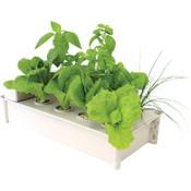 Hydrofarm, Salad Box, Hydroponic Salad Garden Starter Kit