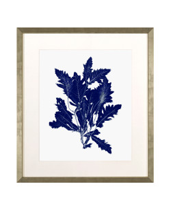 Navy Blue Coral w/ White Background D Framed Giclee
