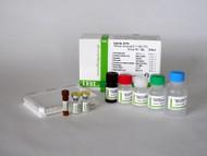 Amyloid Beta ( 1-42 ) ( FL ) Aβ