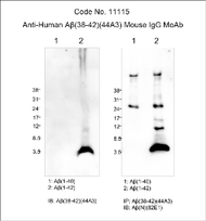 Amyloid Beta ( 38-42 ) ( 44A3 ) Aβ Anti-Human Mouse IgG MoAb