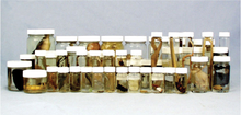 Specimen Jar Set