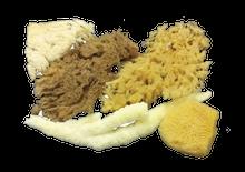 Ocean Sponges