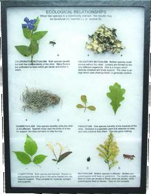 Ecological Relationships Display Mount