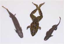 Amphibian Kit