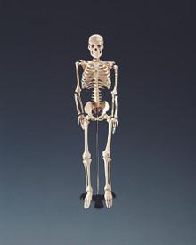 Mr. Thrifty Skeleton