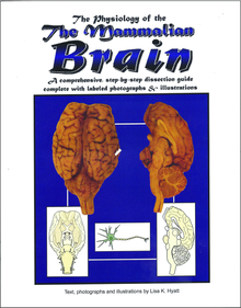 Brain Dissection Reference Guide