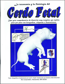 Fetal Pig Guide (Spanish)