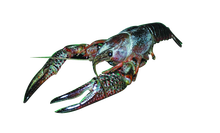 "4"" - 6"" Plain Crayfish Pail"