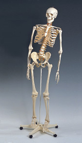 Mr. Flexible Skeleton
