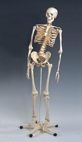 Mr. Flexible Skeleton