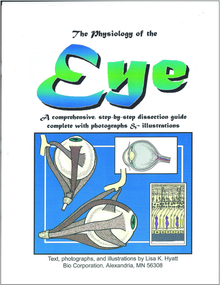 Eye Dissection Reference Guide