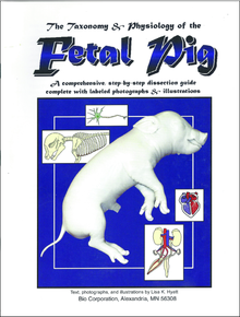 Fetal Pig Dissection Reference Guide