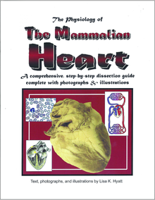 Heart Dissection Reference Guide
