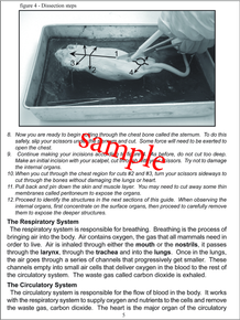 Earthworm Dissection Packet - Advanced