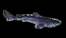 """18"""" - 22"""" Plain Dogfish Shark Pail"""