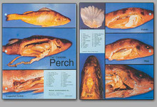 Concise Dissection Chart - Perch