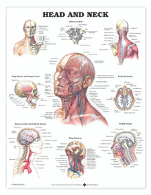 Reference Chart - Head and Neck
