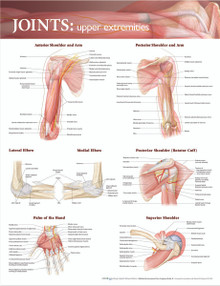Reference Chart - Joints of the Upper Extremities