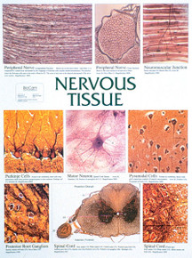 Wall Chart - Nervous Tissue