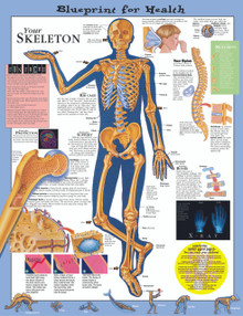 Reference Chart - Elementary Your Skeleton