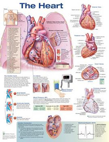 Reference Chart - Heart