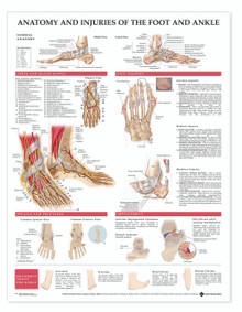 Reference Chart - Anatomy and Injuries of the Foot and Ankle