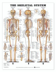 Reference Chart - Skeletal System