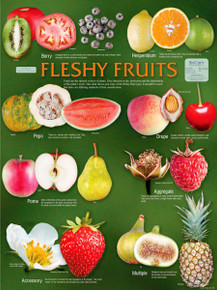Wall Chart - Fleshy Fruits