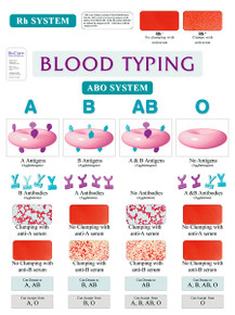 Wall Chart - Blood Types