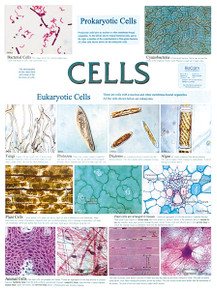 Wall Chart - Cells