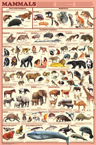 Display Chart - Mammals