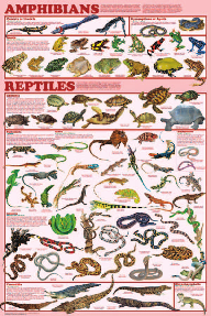 Display Chart - Amphibian