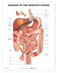 Reference Chart - Diseases of the Digestive System