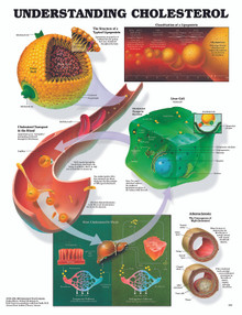Reference Chart - Understanding Cholesterol