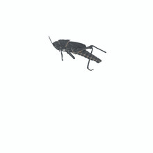 Economy Grasshoppers unit of 10