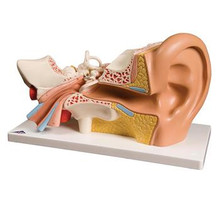 Four-Part Ear Model