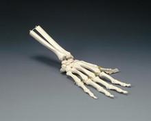 Elastic Hand Model
