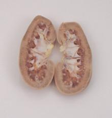 Pig Kidney - Cut in half - Plain preserved