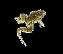 """4.5"""" - 5"""" Plain Leopard Frog Pail"""