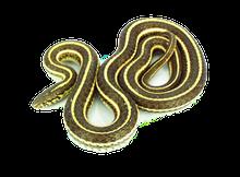 """14"""" - 18"""" Plain Garter Snake"""