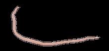 Pig Round Worm (ascaris)