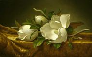 Magnolias on Gold Velvet Cloth  by Martin Johnson Heade Framed Print on Canvas