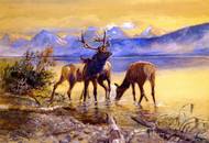 Elk in Lake McDonald 1906 by Charles M Russell Framed Print on Canvas
