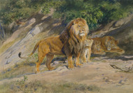 The King watches 1887 by Rosa Bonheur Framed Print on Canvas