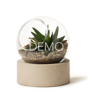 [Sample] Orbit Terrarium - Small