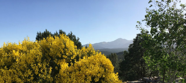 spanish-broom-mountain-view.jpg