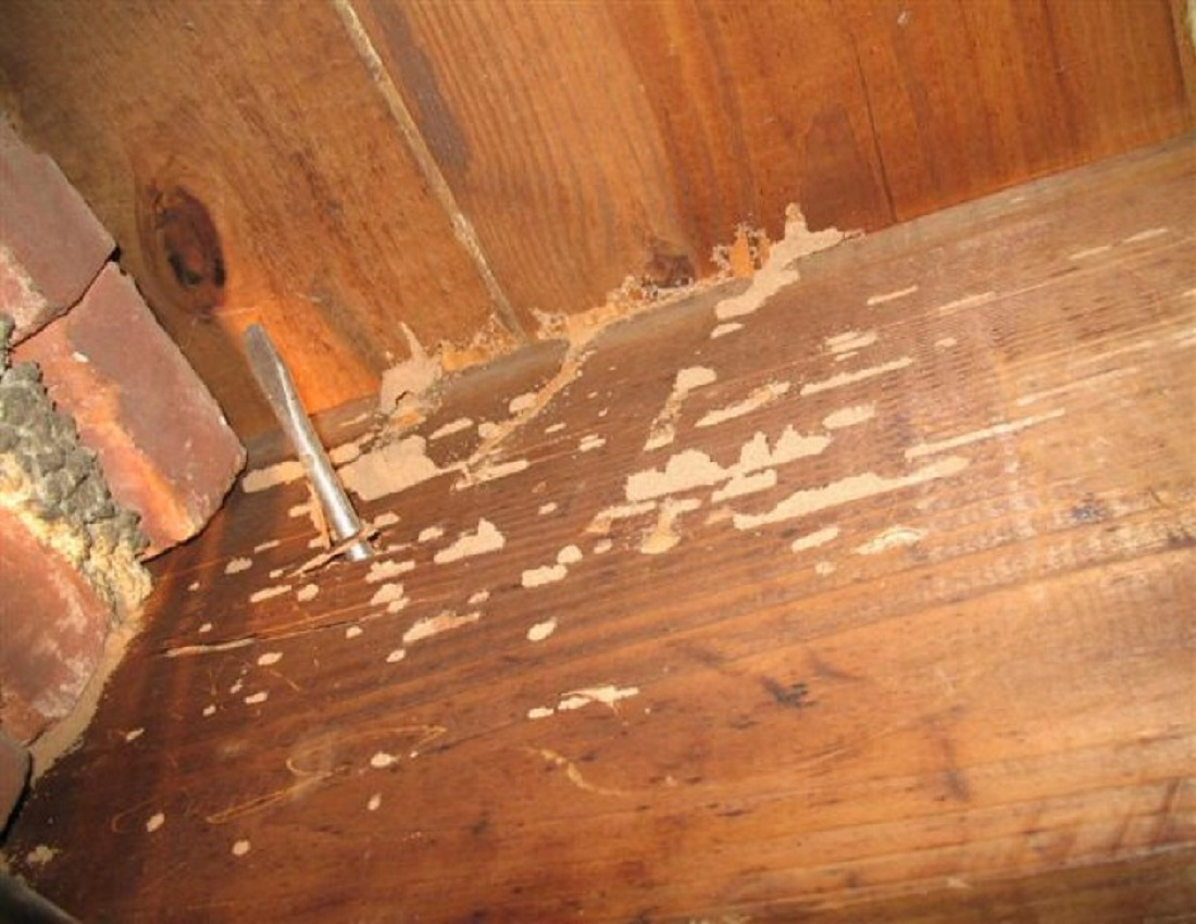 protecting wooden furniture against termites