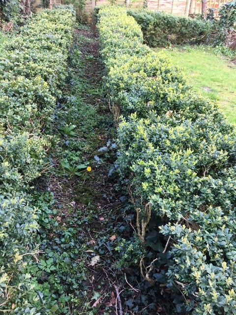 box-hedge-path-2-.jpg