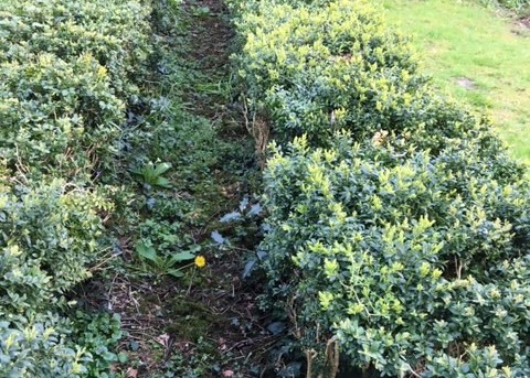 box-hedge-path-4-.jpg